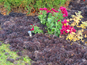 Add Colorful Flowers for Curb Appeal